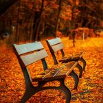bench-forest-trees-path